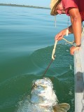 Mark Longster - Tarpon - Sport Fishing in The Gambia